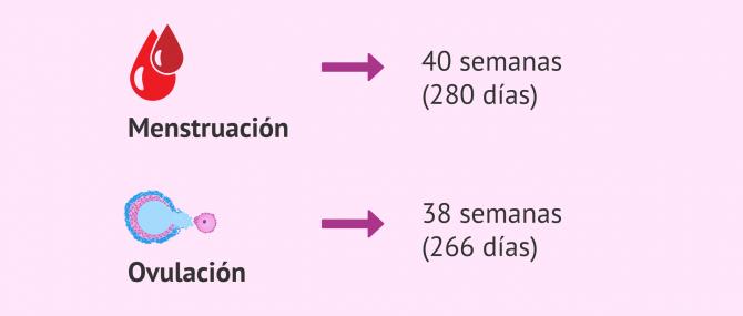 Imagen: Fecha de parto a partir de la última menstruación y la ovulación