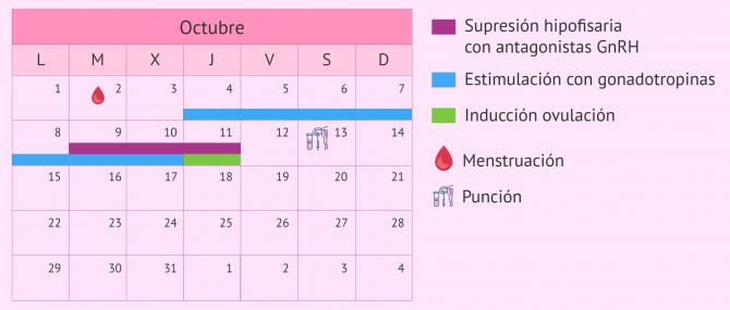 Imagen: Calendario para un protocolo de estimulación corto