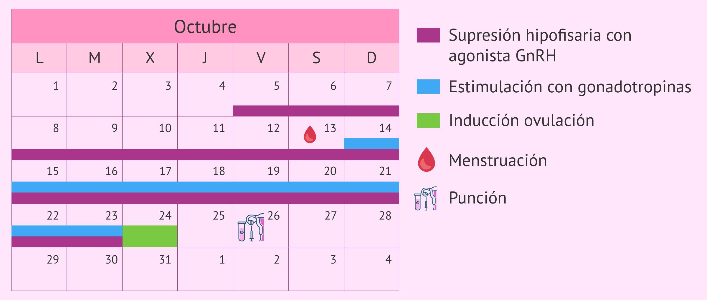 Calendario para un protocolo de estimulación largo