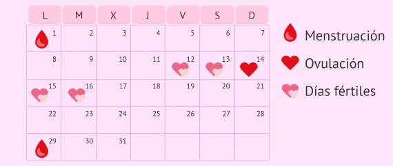Imagen: Calendario de días fértiles