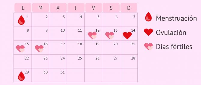 Calendario De Mis Dias Fertiles.La Ovulacion Que Es Cuando Se Produce Que Sintomas Tiene