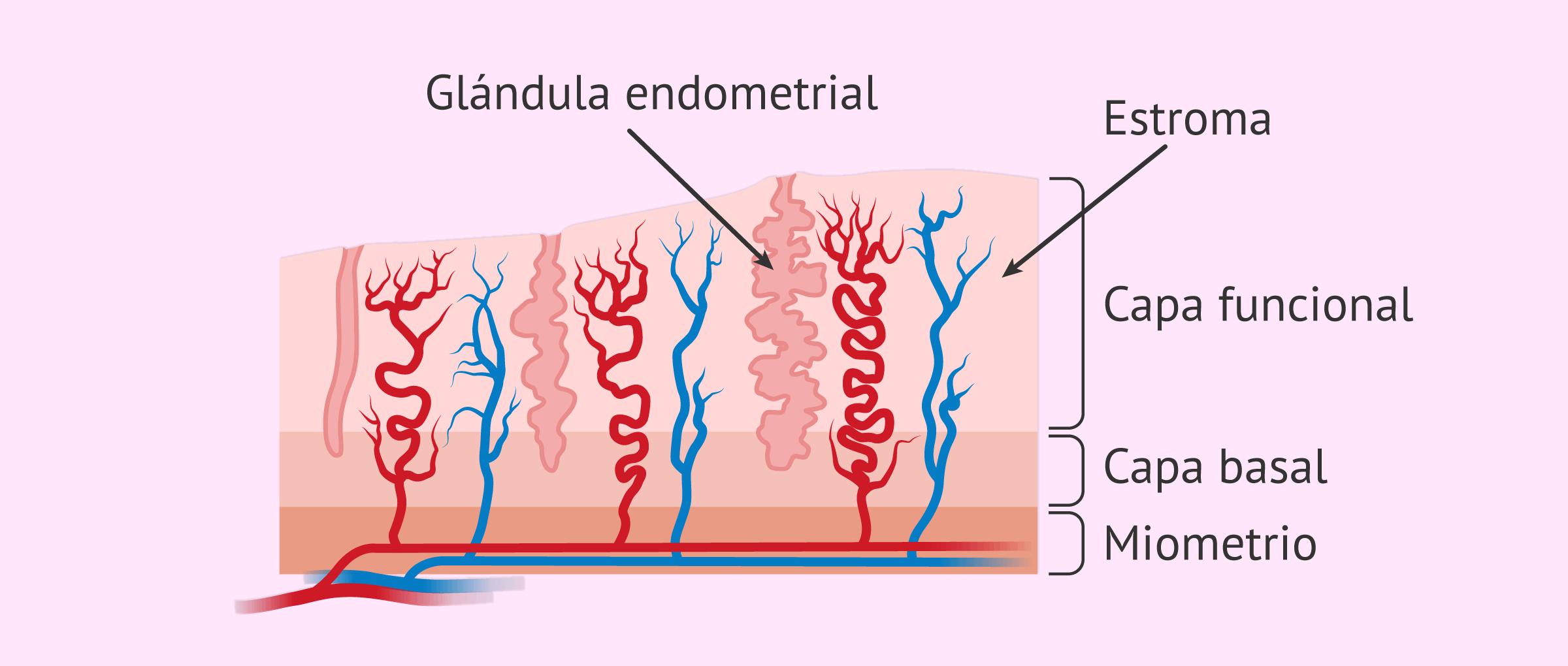 Cambios en el endometrio