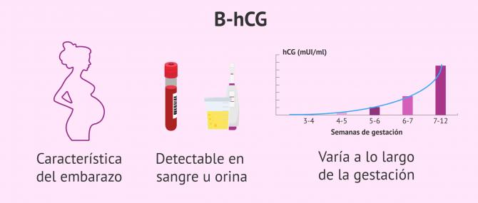Imagen: Características de la beta hCG