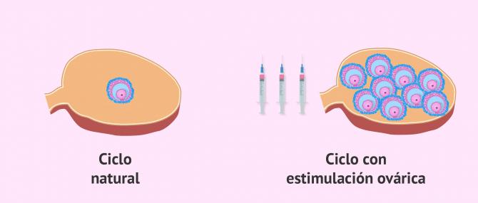 Imagen: Ciclo normal vs. ciclo estimulado
