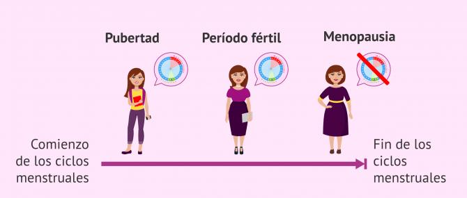 Imagen: Etapas de la fertilidad femenina