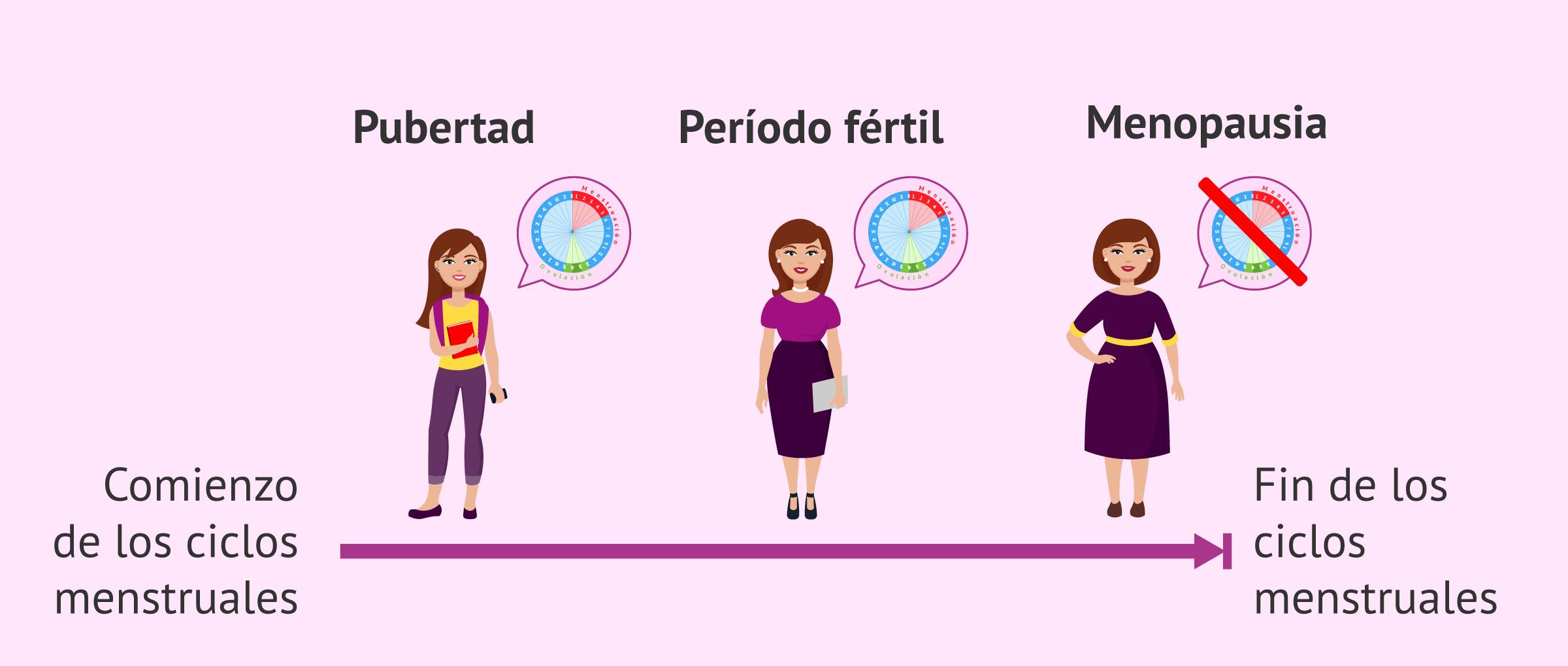Etapas de la fertilidad femenina