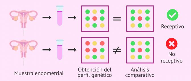 Imagen: Comparativa de los genes que se expresan en el endometrio