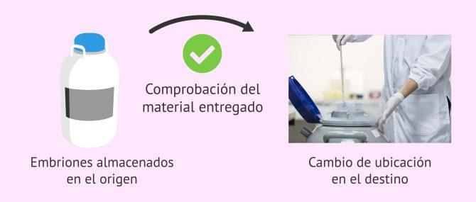 Imagen: Comprobación de los embriones recibidos en el centro de destino