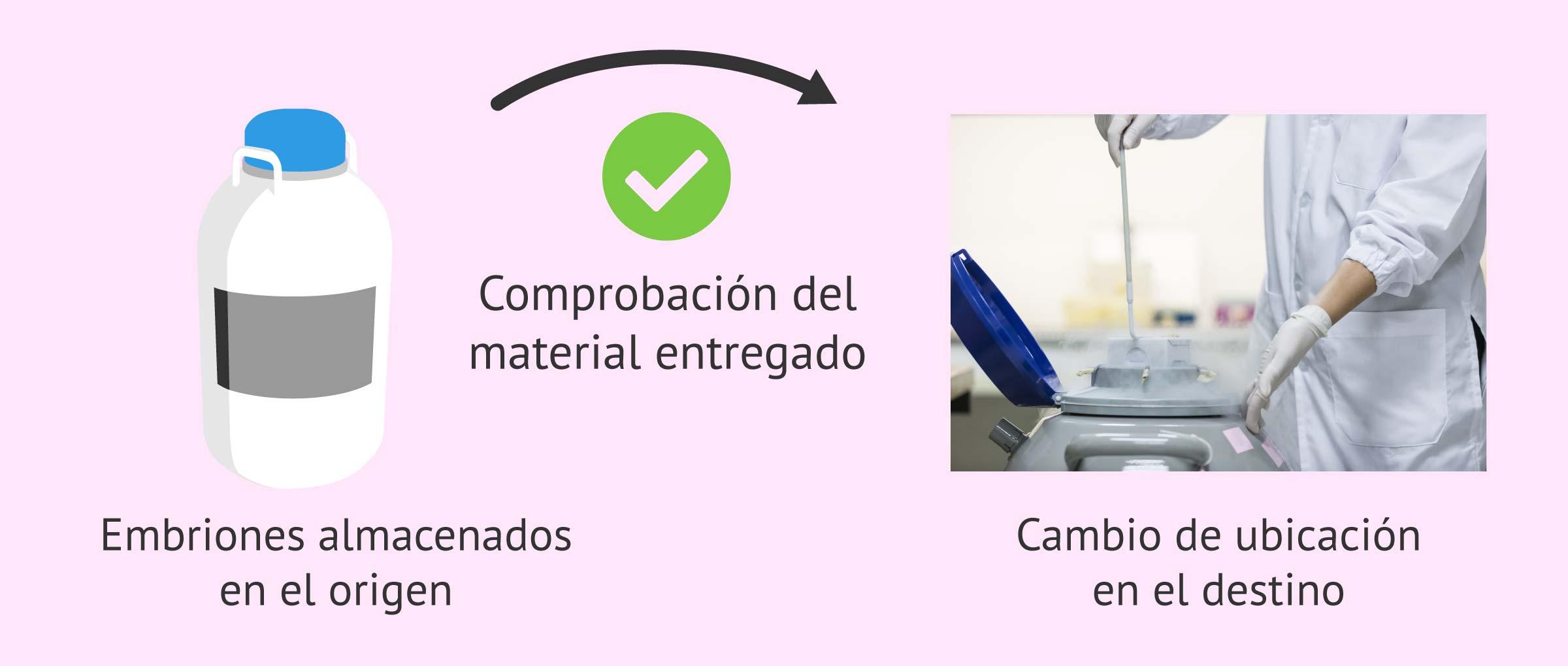 Comprobación de los embriones recibidos en el centro de destino