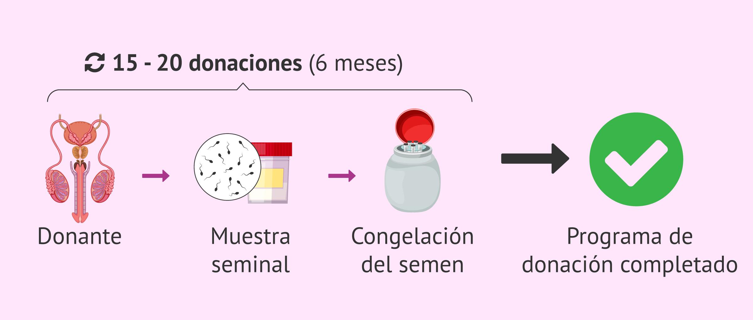 ¿Cómo es un ciclo de donación de semen?