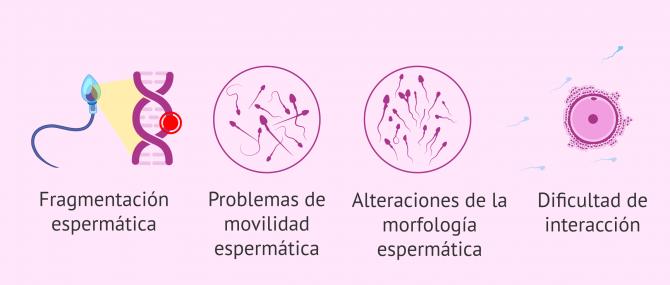 Imagen: Consecuencias del estrés oxidativo en el esperma