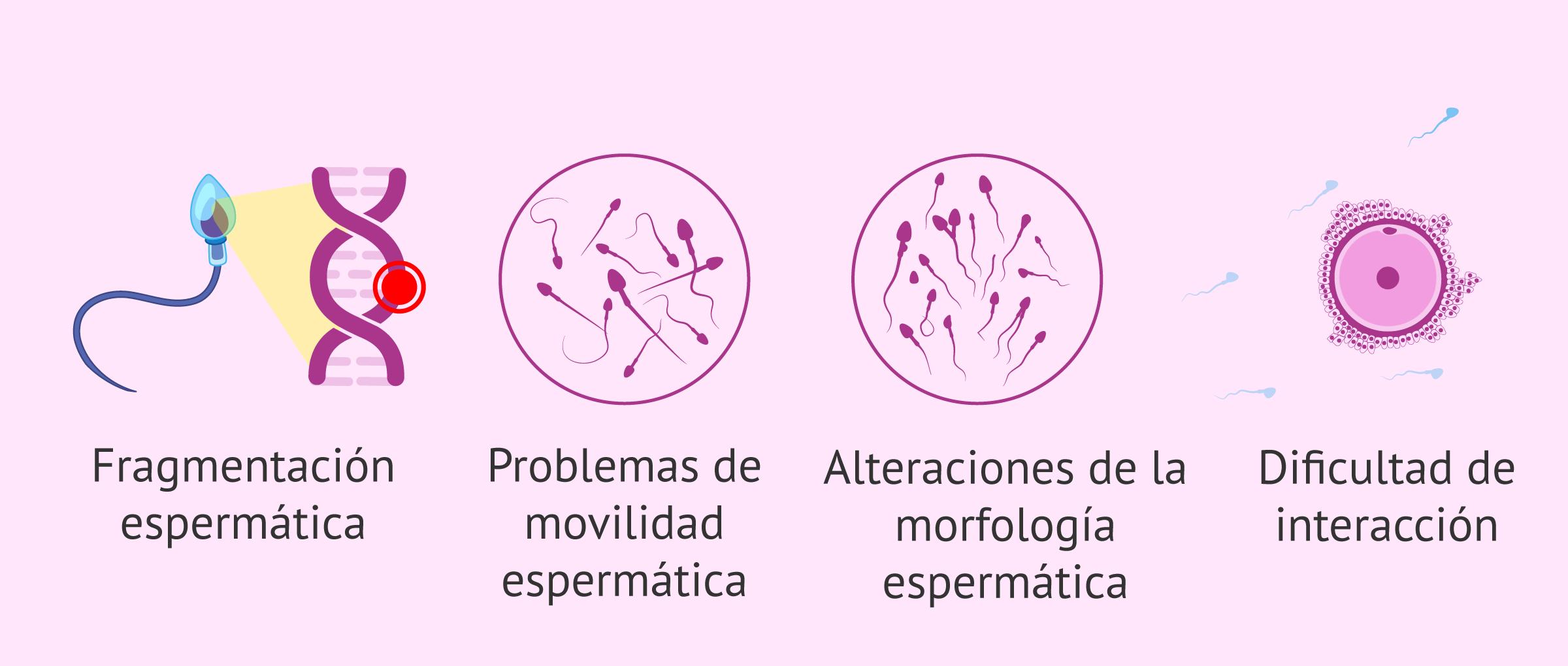Consecuencias del estrés oxidativo en el esperma