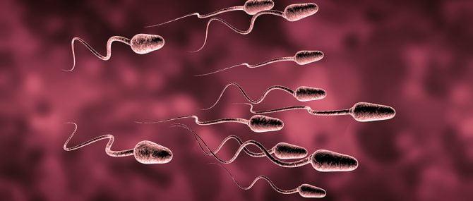 Imagen: semen artificial-espermatozoides artificiales de ratón-investigaciones.