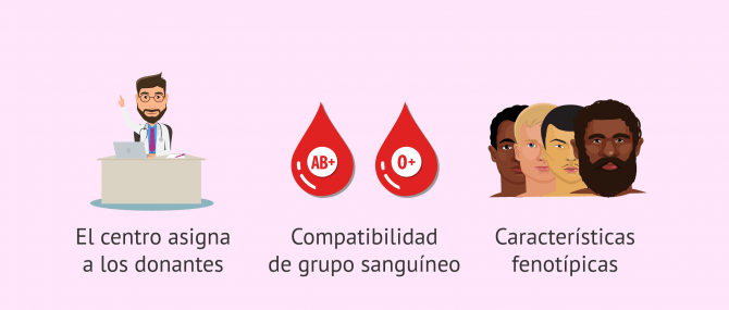 Imagen: Criterios de asignación de donantes de esperma