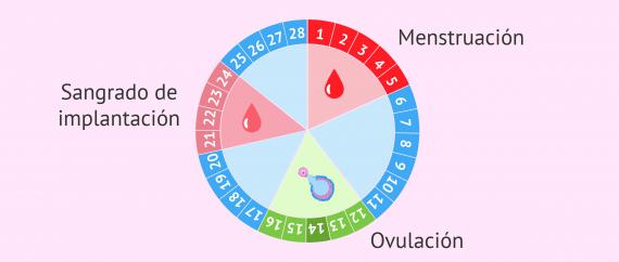 Imagen: Sangrado de implantación en el ciclo menstrual