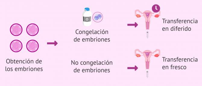 Imagen: Modelos de transferencias embrionarias