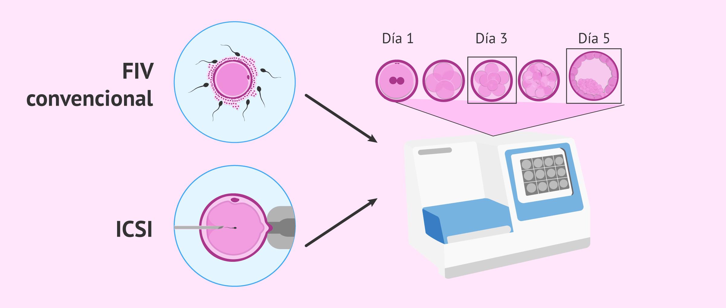 ¿Qué es el cultivo embrionario?