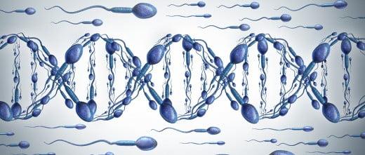Espermatozoides en el tubo seminífero