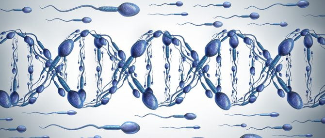 Imagen: Espermatozoides en el tubo seminífero
