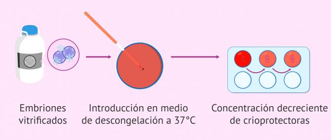 Imagen: Proceso de desvitrificación de embriones