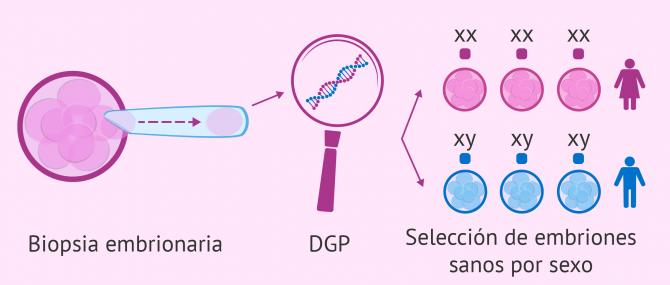 Imagen: DGP para selección del sexo