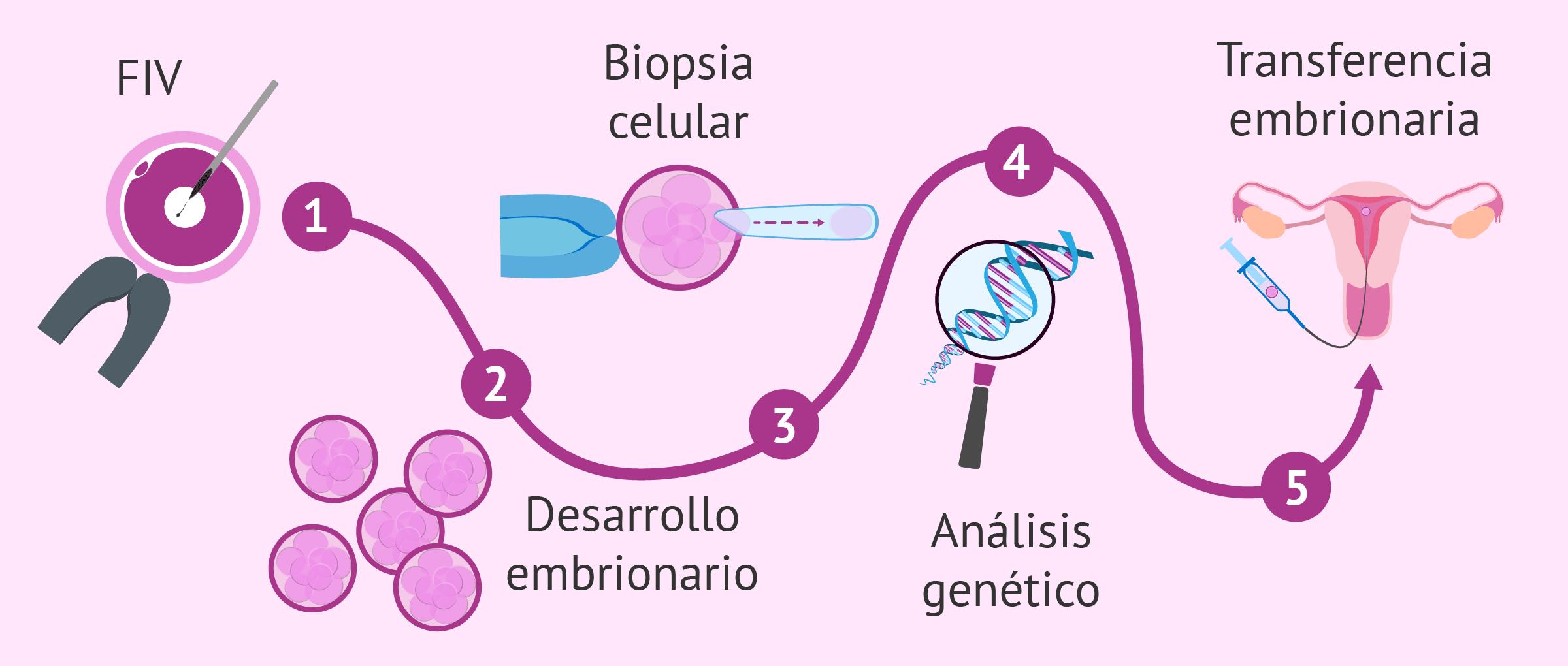 ¿Cuál es el procedimiento del diagnóstico genético preimplantacional?