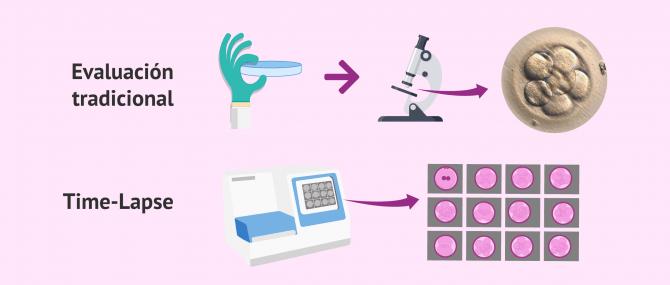 Imagen: ¿Cómo se evalúa la calidad de los embriones?