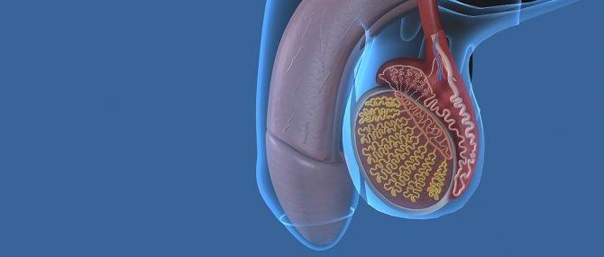Insuficiencia renal y disfunción eréctil