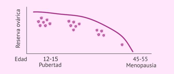 Imagen: Disminución de la reserva ovárica con la edad