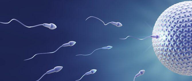 Imagen: Donación de óvulos y esperma