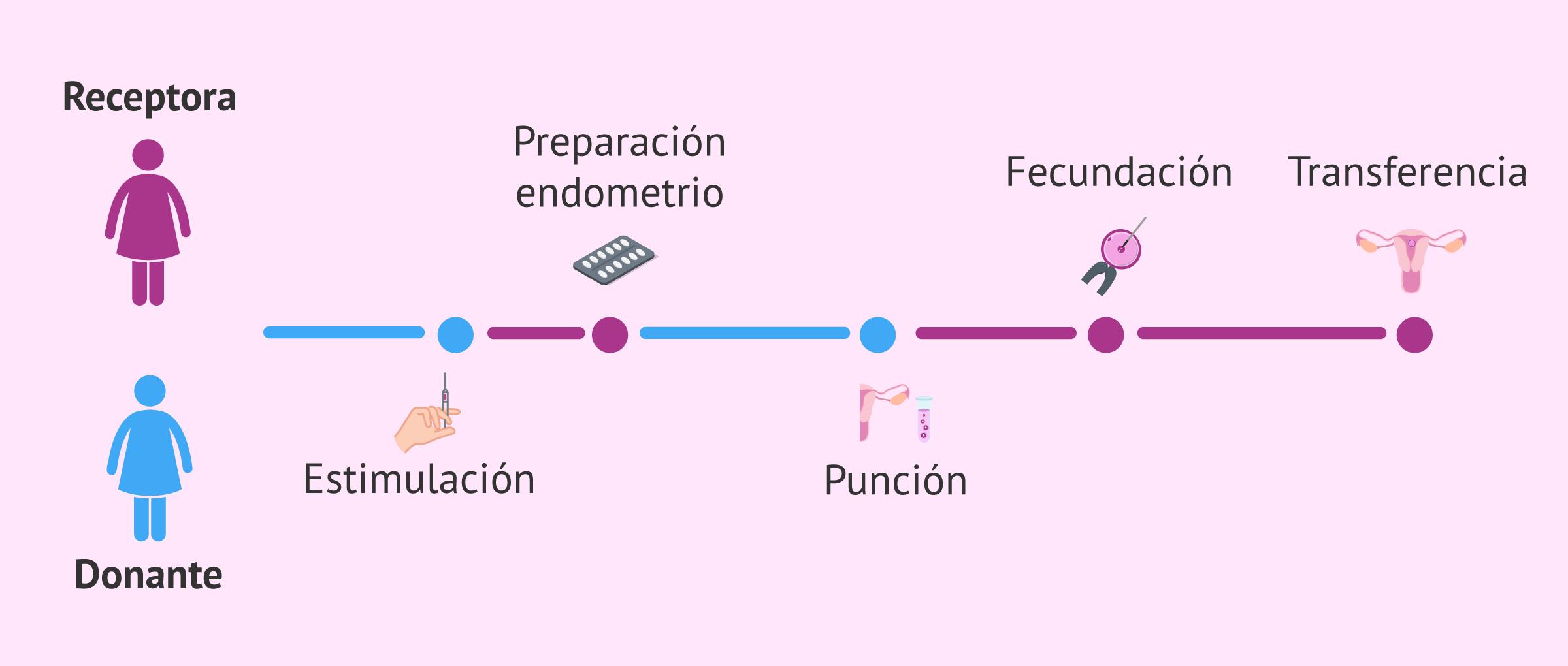 Donación de óvulos en fresco. Sincronización de donante y receptora