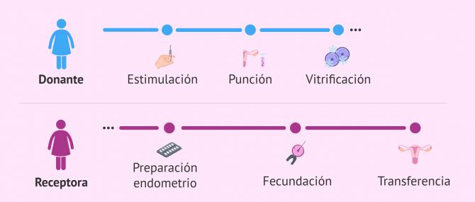 Imagen: Donación de óvulos vitrificados. Sincronización de donante y receptora