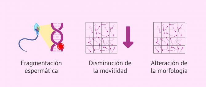 Imagen: Efectos de las ROS en el semen