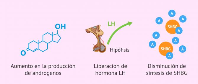 Imagen: Efectos de la resistencia a la insulina y el hiperinsulinismo