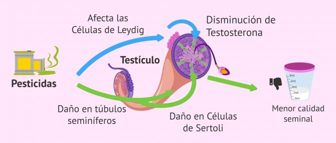 Imagen: ¿Cómo influyen los pesticidas en la fertilidad del varón?