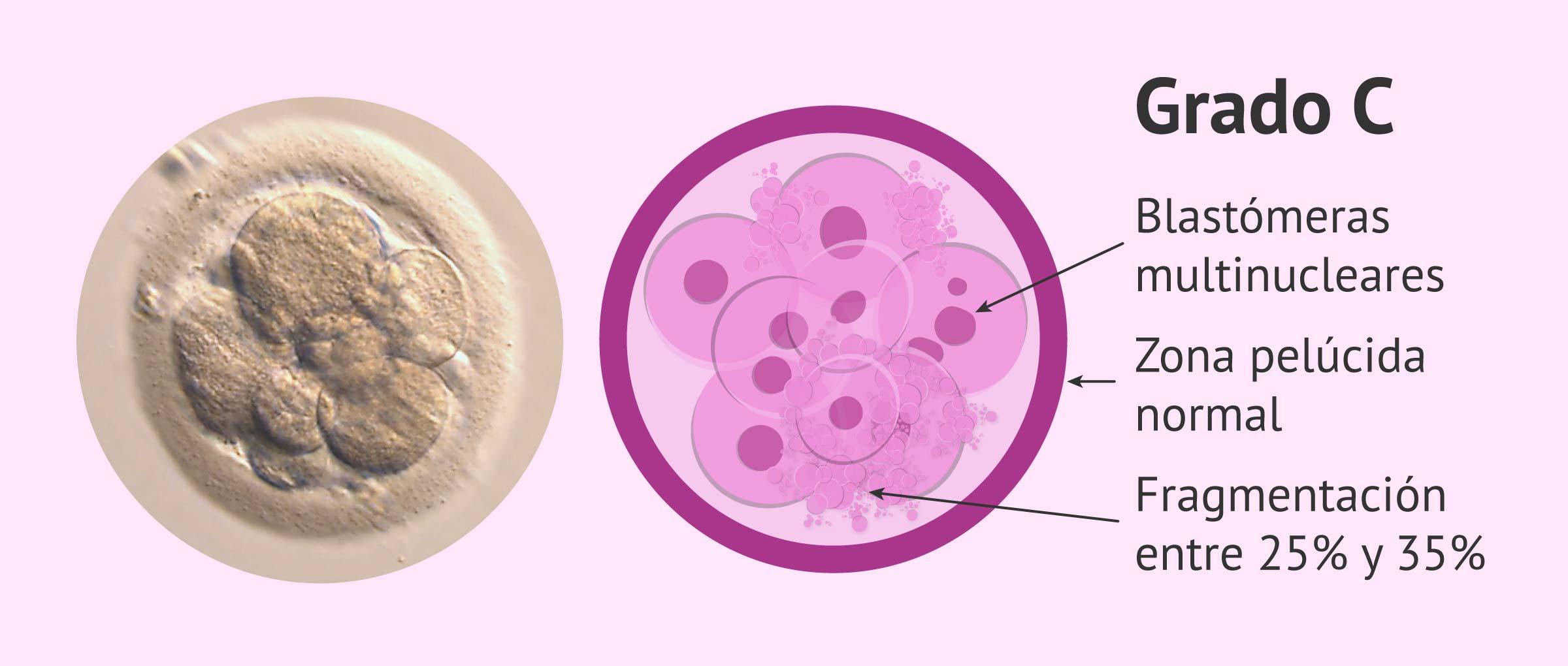 Calidad embrionaria: grado C