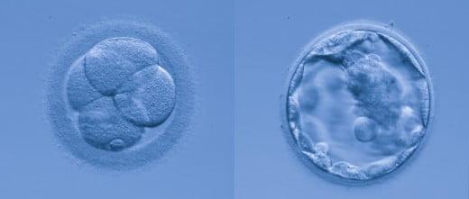 Embriones laboratorio
