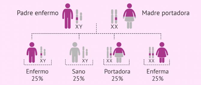 Imagen: Herencia de enfermedades ligadas al cromosoma X recesivas