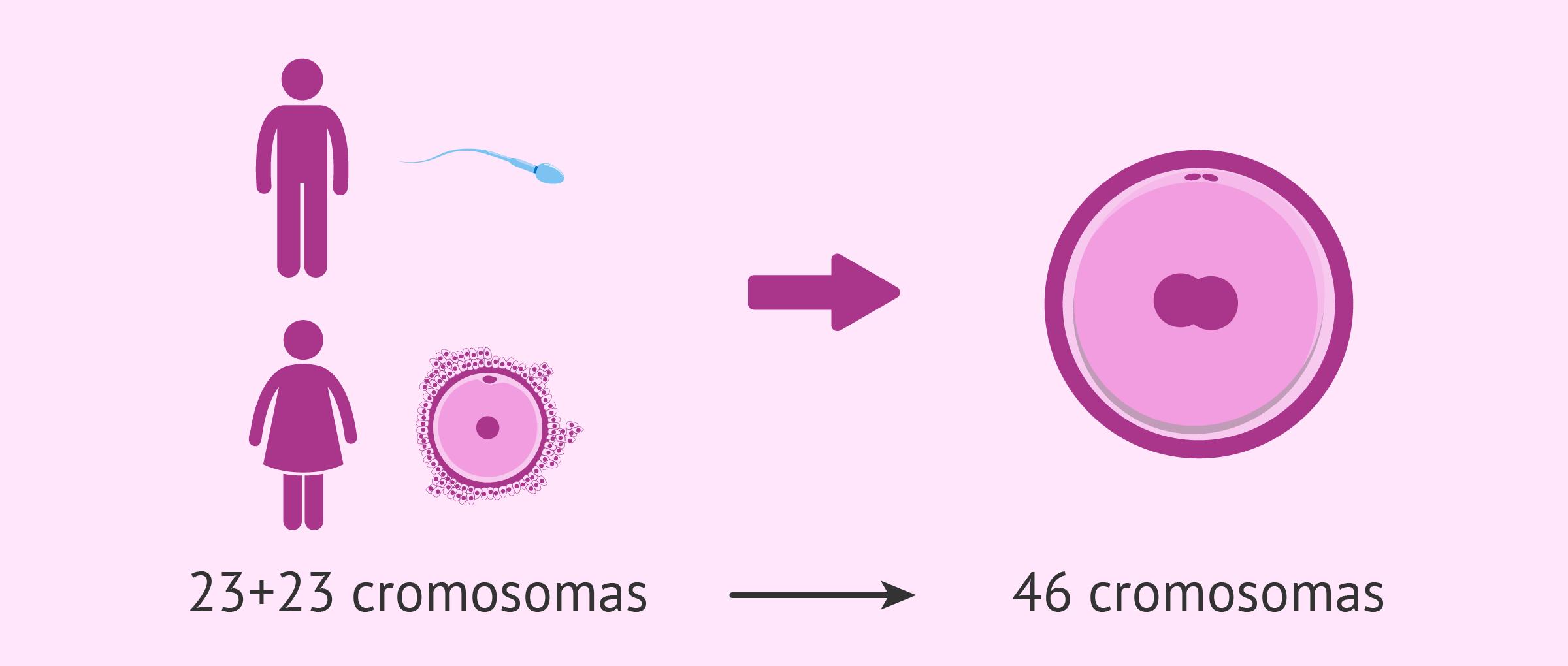 Eyaculación de espermatozoides