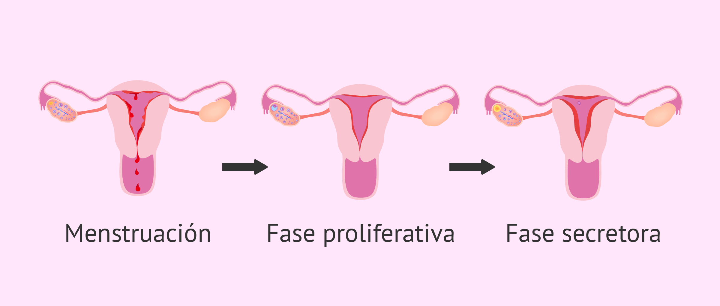 La menstruación