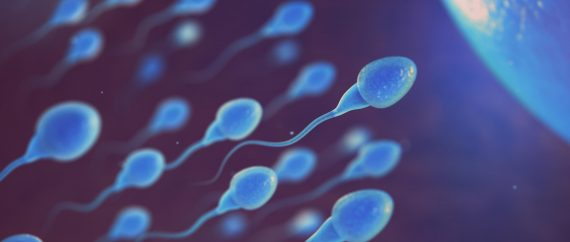 Imagen: Un estudio analiza la relación del estrés oxidativo de los espermatozoides con las técnicas de reproducción IUI y ICSI.