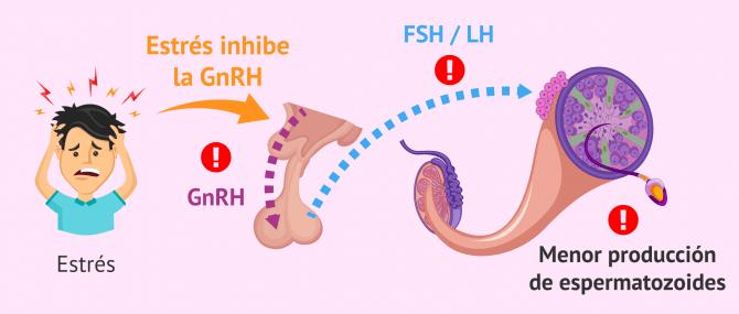 Imagen: estres-produccion-espermatozoides-alterado