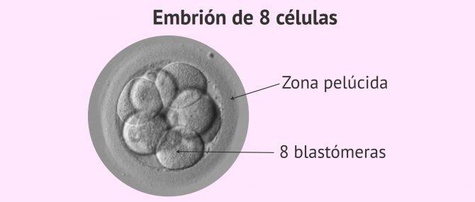 Imagen: Embrión de 3 días