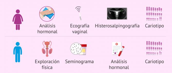 Imagen: Estudio de fertilidad