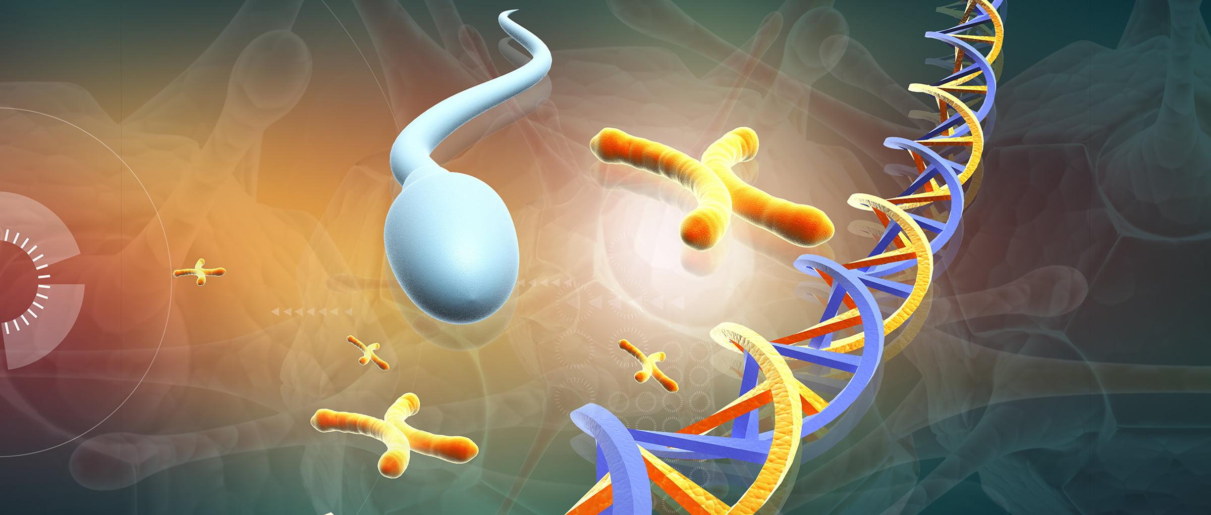 Genética del espermatozoide