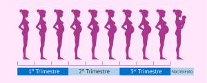 Embarazo mes a mes