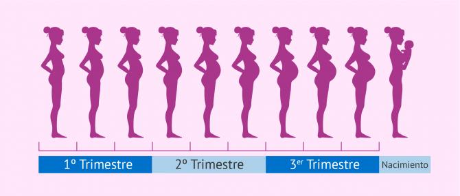 Embarazo mes a mes: desarrollo del feto y cambios en la madre