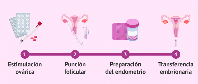 Imagen: Etapas de la FIV hasta la transferencia embrionaria