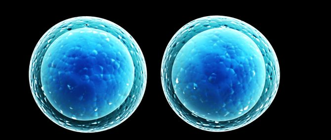 La transferencia de un único embrión en tratamientos de fecundación in vitro pretende evitar los embarazos múltiples