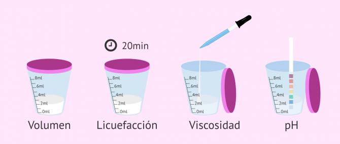 Imagen: Pruebas del estudio macroscópico del semen